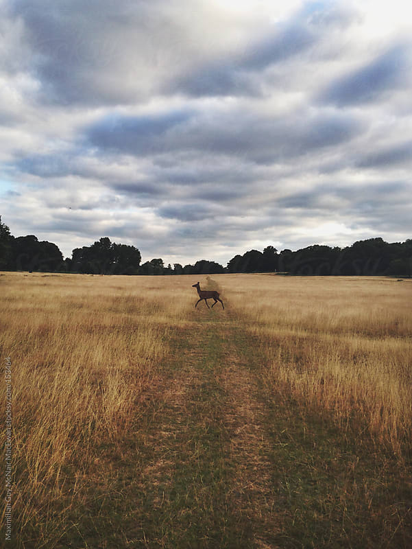 Deer Crossing by Maximilian Guy McNair MacEwan for Stocksy United