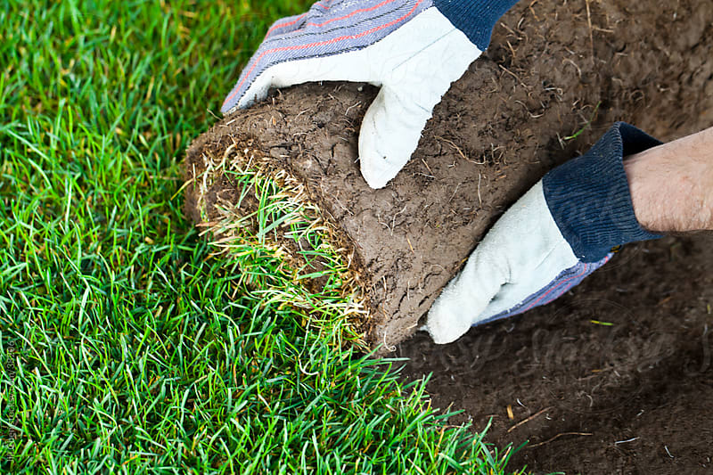 Laying Sod by Jill Chen for Stocksy United
