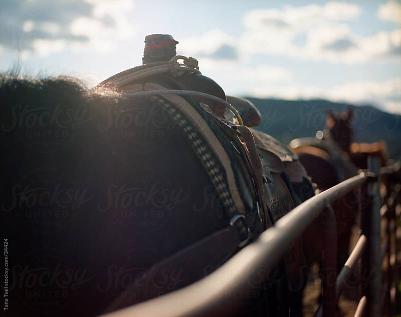 A saddled horse standing at the fence  shot on medium format portra film. by Tana Teel for Stocksy United