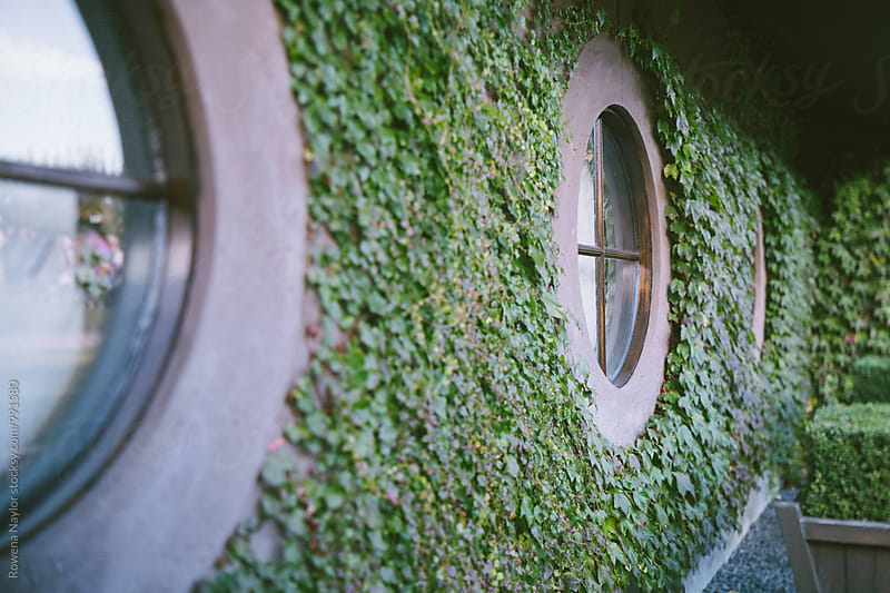 Porthole windows with climbing ivy by Rowena Naylor for Stocksy United