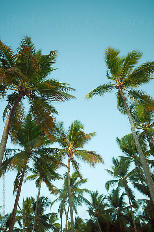 Palm trees in the Caribbean islands by CACTUS Blai Baules for Stocksy United