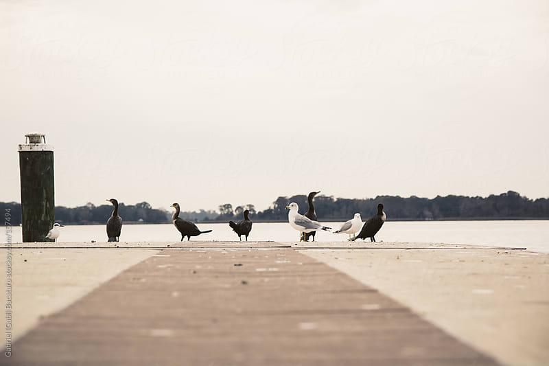 Birds on Pier by Gabriel (Gabi) Bucataru for Stocksy United