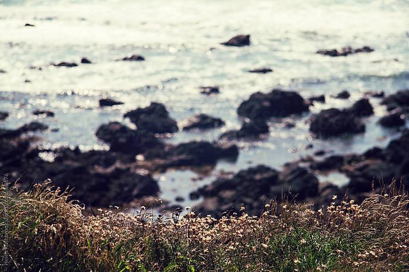 Wildflowers on the edge of a cliff, overlooking a rocky shoreline by Helen Rushbrook for Stocksy United