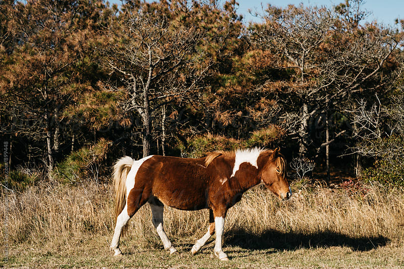 Horse walking  by Isaiah & Taylor Photography for Stocksy United