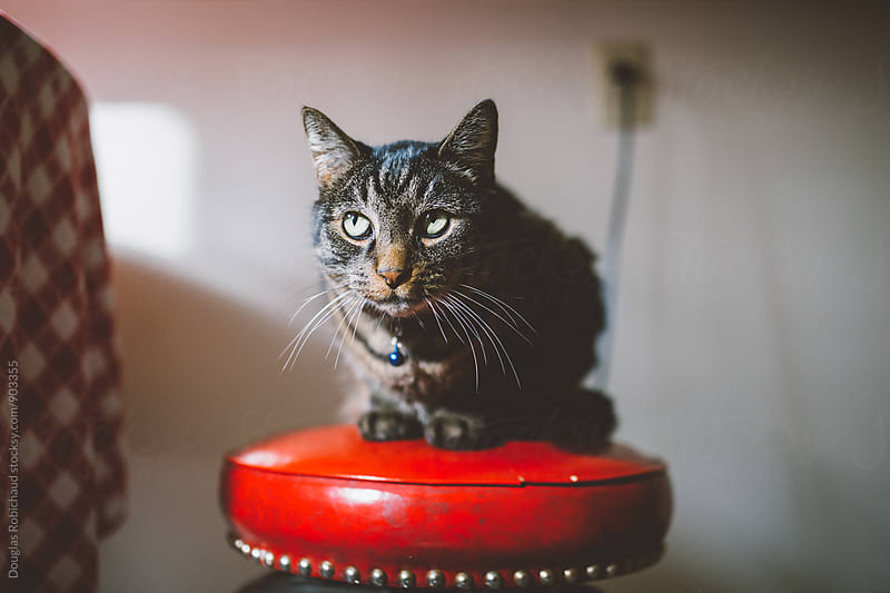 Cat Sitting on a Stool by Douglas Robichaud for Stocksy United
