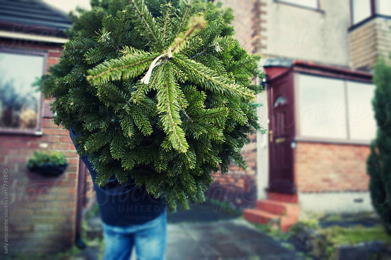 Man carrying a Christmas tree by sally anscombe for Stocksy United