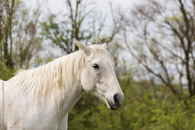 White horse in the countryside by Marilar Irastorza for Stocksy United