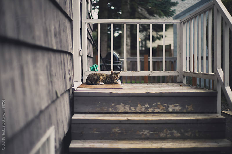 Tired cat rests on porch stairs by Rachel Bellinsky for Stocksy United
