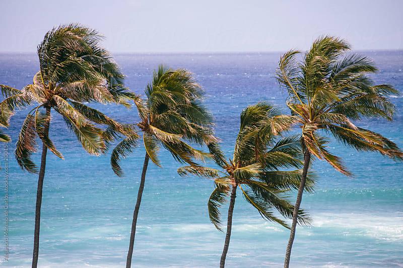 Palm trees and sea by Alejandro Moreno de Carlos for Stocksy United