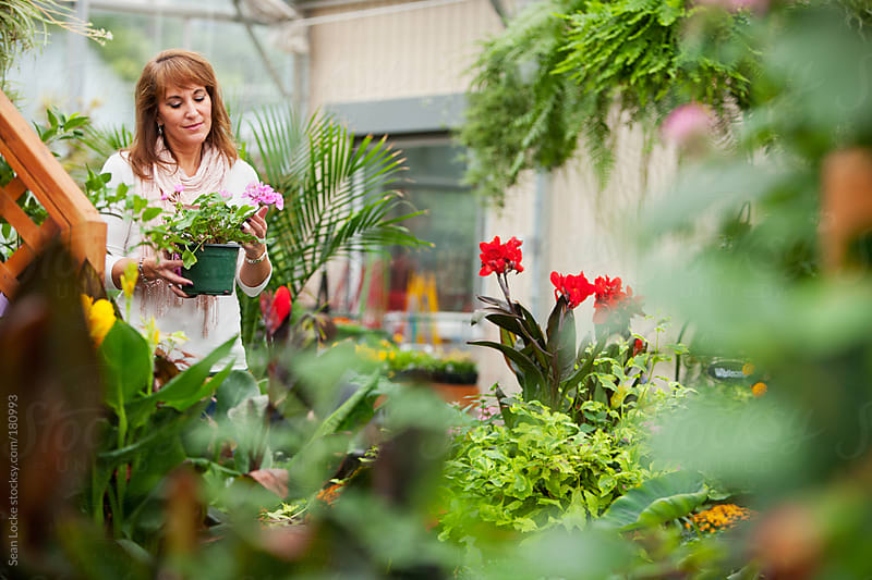Market: Woman Shopping For Plants In Greenhouse by Sean Locke for Stocksy United