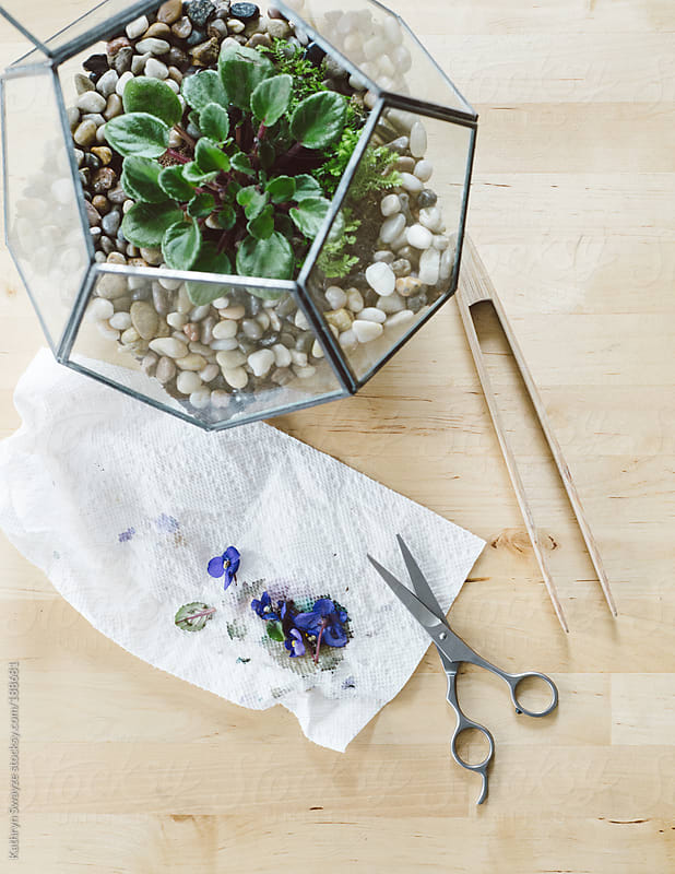 Pruning tools sit next to geometric terrarium with African Violet plant by Kathryn Swayze for Stocksy United
