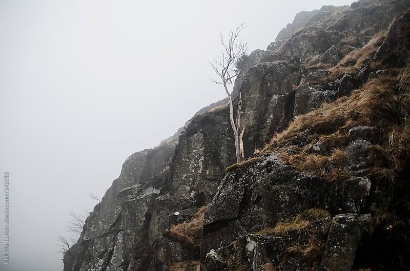 Wild Tree by Neil Warburton for Stocksy United