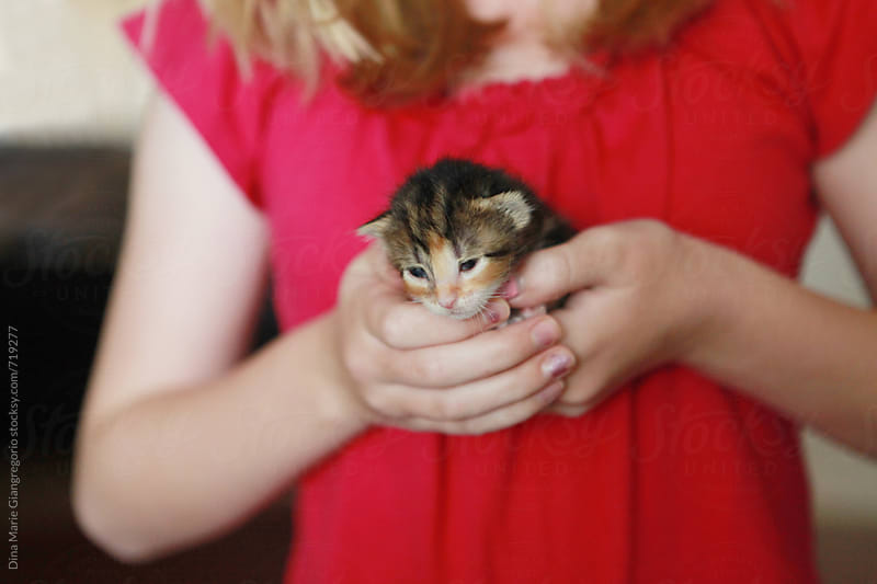 Girl Holding Tiny Newborn Calico Kitten by Dina Giangregorio for Stocksy United
