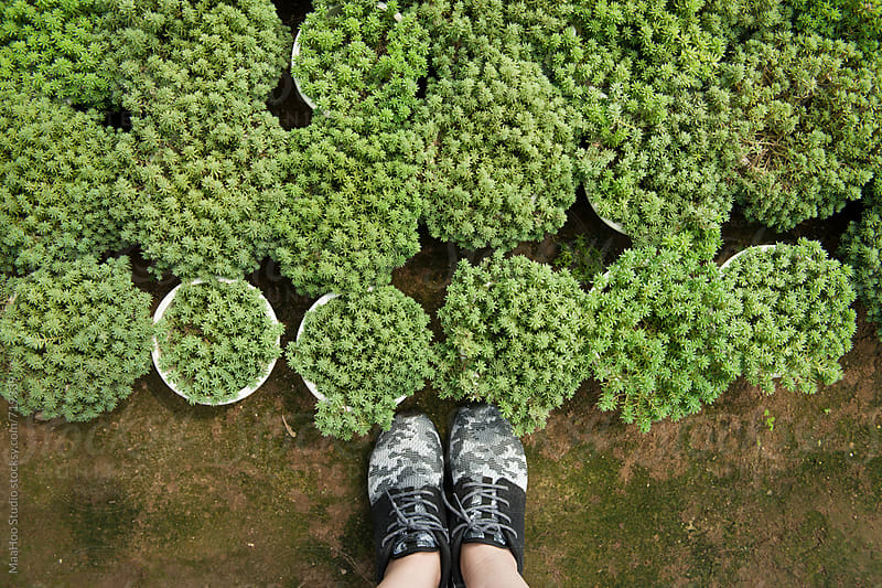 Girl  standing over a large succulent collection by MaaHoo Studio for Stocksy United