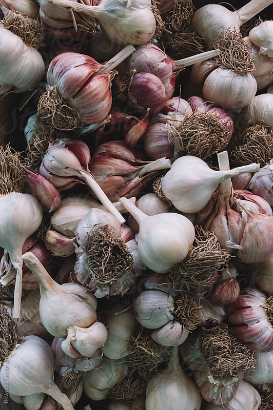 Organic garlic bulbs by Rowena Naylor for Stocksy United