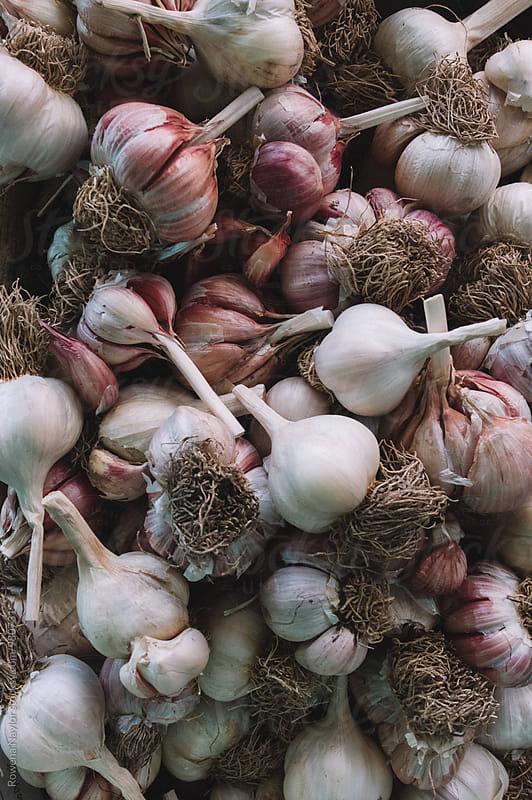 Organic garlic bulbs by Rowena Naylor for Stocksy United