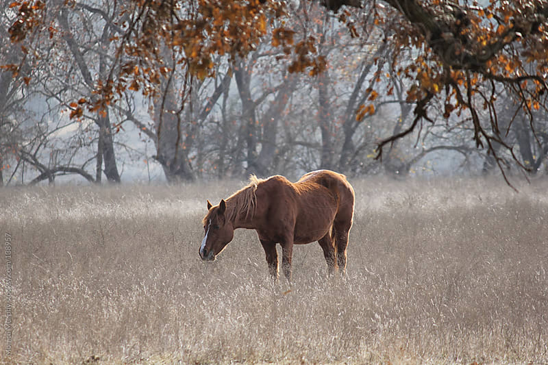 Lone Horse in a field of Grasses by Monica Murphy for Stocksy United