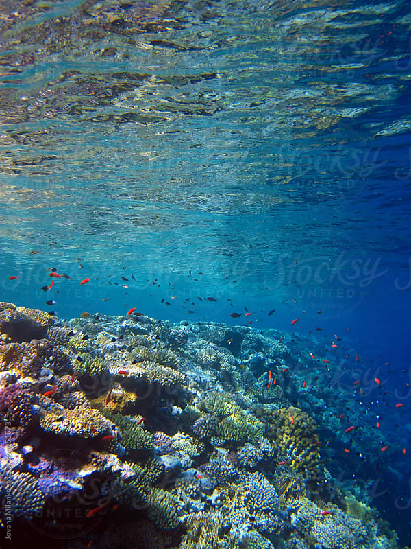 Red Sea's colorful coral reef by Jovana Milanko for Stocksy United