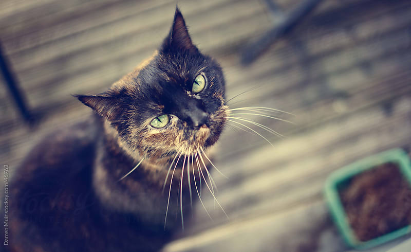 Female cat looking up at owner.  by Darren Muir for Stocksy United
