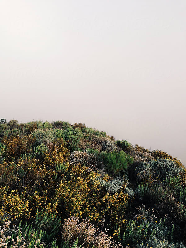 Foggy Wild Flower Hill by Kevin Russ for Stocksy United