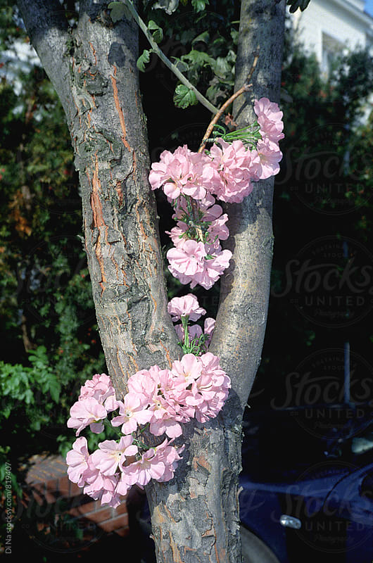 Pink flowers on the tree by Di Na for Stocksy United