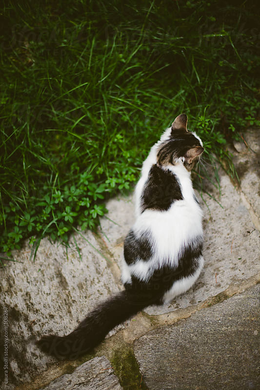 Kitten sitting in garden on ancient stone seen from behind by Laura Stolfi for Stocksy United