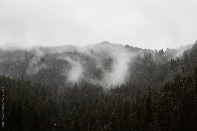 Low clouds covering a wooded mountain side.  by Justin Mullet for Stocksy United