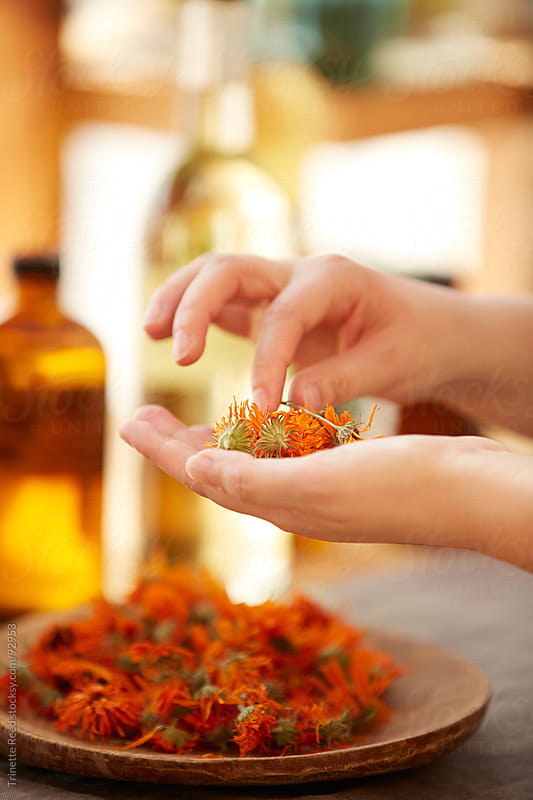 Woman farmer harvesting calendula flowers for aromatherapy products by Trinette Reed for Stocksy United