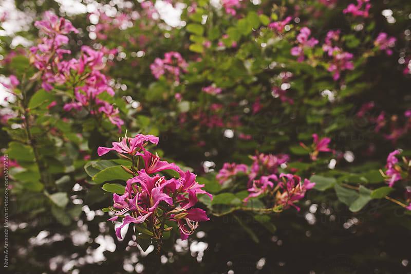 pink flower tree by Nate & Amanda Howard for Stocksy United