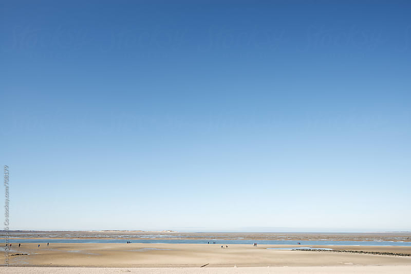 Intertidal mudflats by Urs Siedentop & Co for Stocksy United