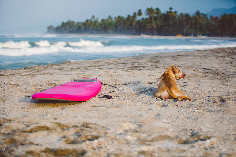 A dog and his board by Addie Mannan Photography for Stocksy United