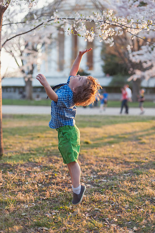Young Toddler Boy Jumping To Reach For A Cherry Blossom by Cameron Whitman for Stocksy United