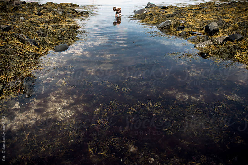 Boy wades in the ocean, exploring a large tide pool filled with seaweed by Cara Dolan for Stocksy United