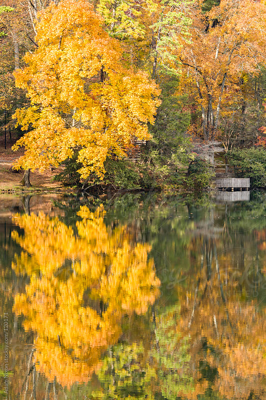 Wooden deck over looking a lake in Autumn by Adam Nixon for Stocksy United