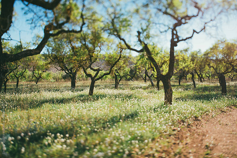 first flowers of spring in a rural field by Javier Pardina for Stocksy United