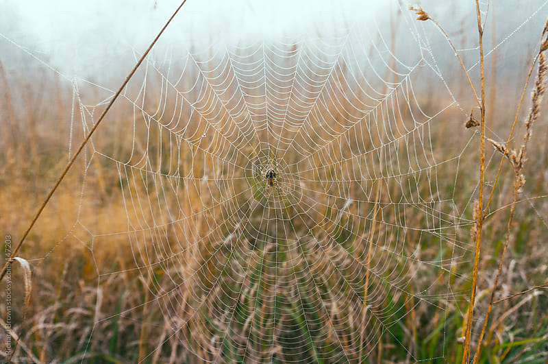 Foggy spider web by Richard Brown for Stocksy United