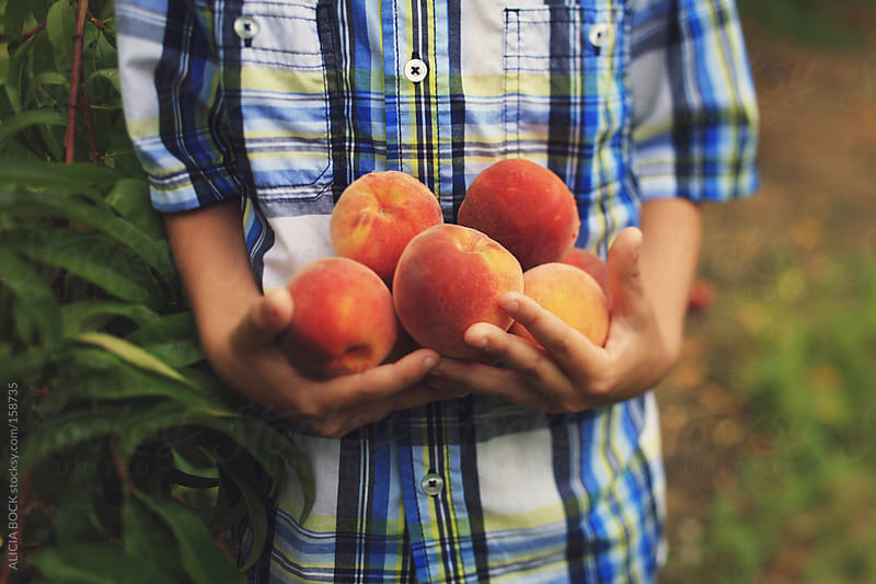 Holding Peaches by ALICIA BOCK for Stocksy United