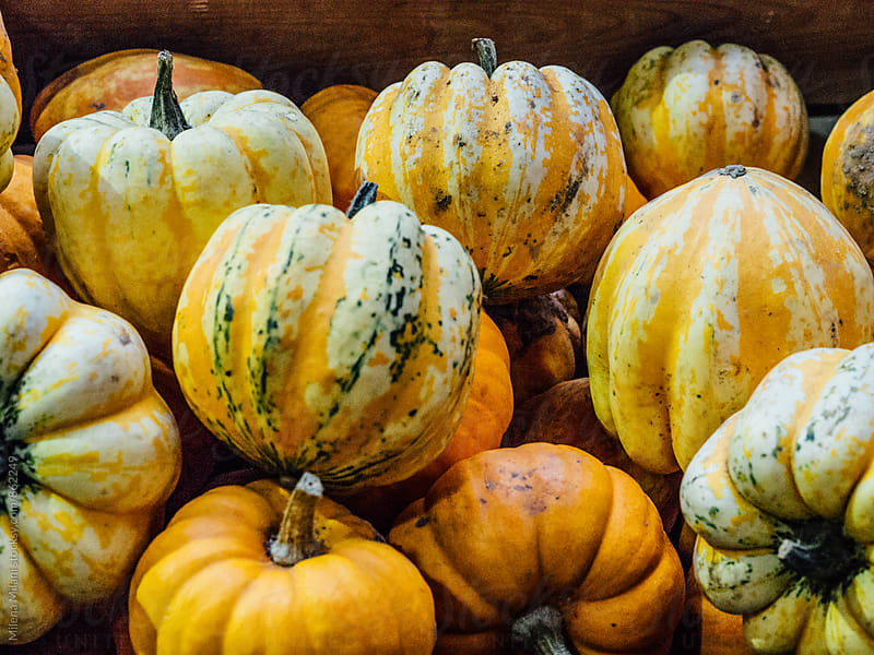 Pumpkins by Milena Milani for Stocksy United