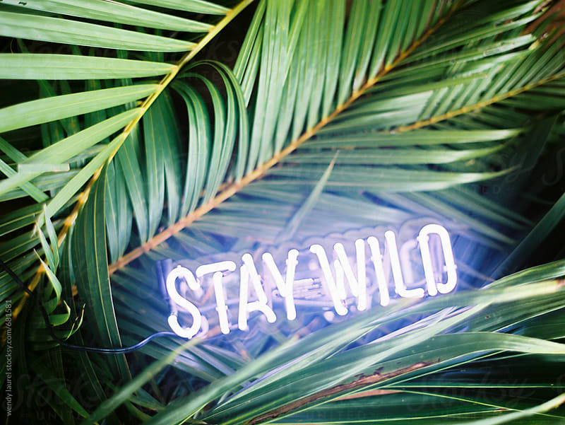 stay wild neon sign on green palms by wendy laurel for Stocksy United