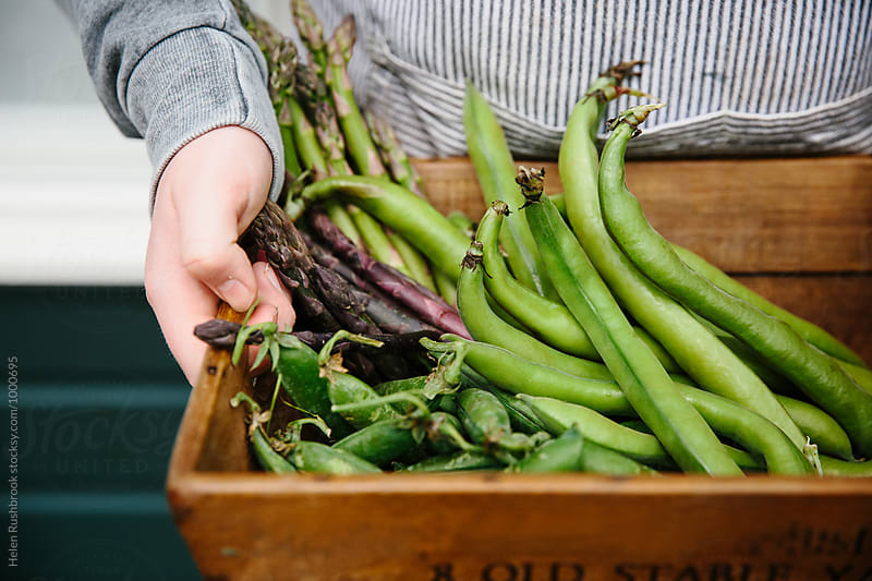 A wooden crate filled with early summer vegetables. by Helen Rushbrook for Stocksy United