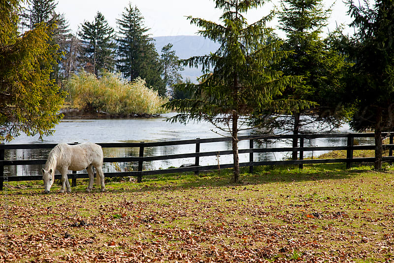 White Horse In Field With Pond by Sari Wynne Ruff for Stocksy United
