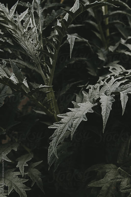 dark green leafy plant by Nicole Mason for Stocksy United