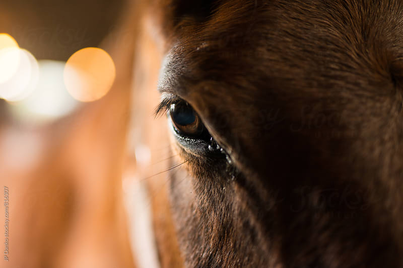 Close Up Detail of A Gentle Horse's Eye at Horesback Riding Lesson in Barn by JP Danko for Stocksy United
