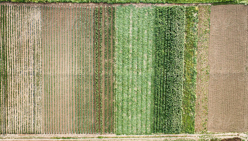 Various types of crops from above by Pixel Stories for Stocksy United