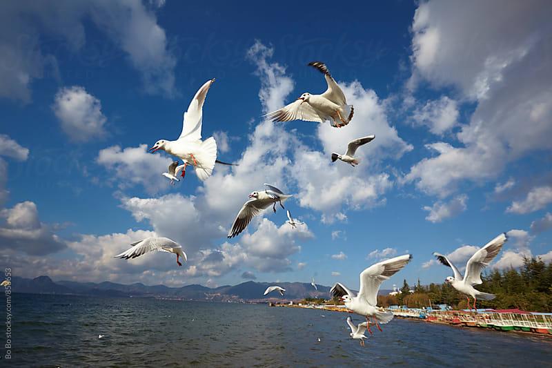 seagull flying  by Bo Bo for Stocksy United