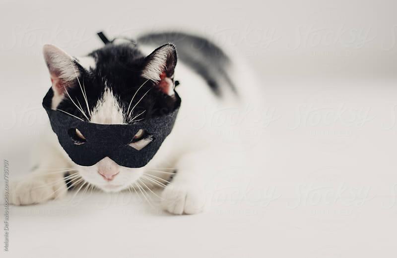 Cat burglar by Melanie DeFazio for Stocksy United