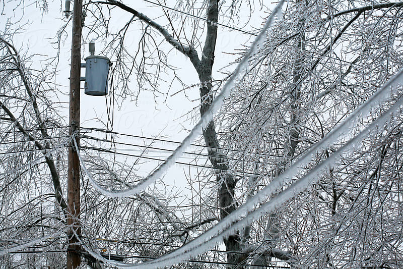 Power Lines And Trees Covered In Ice After A Winter Storm by ALICIA BOCK for Stocksy United