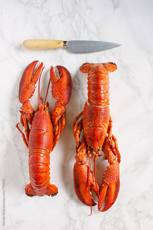Two cooked lobsters on marble background. by Darren Muir for Stocksy United