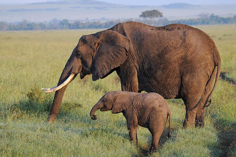 Red Elephants by Gabriel Ozon for Stocksy United