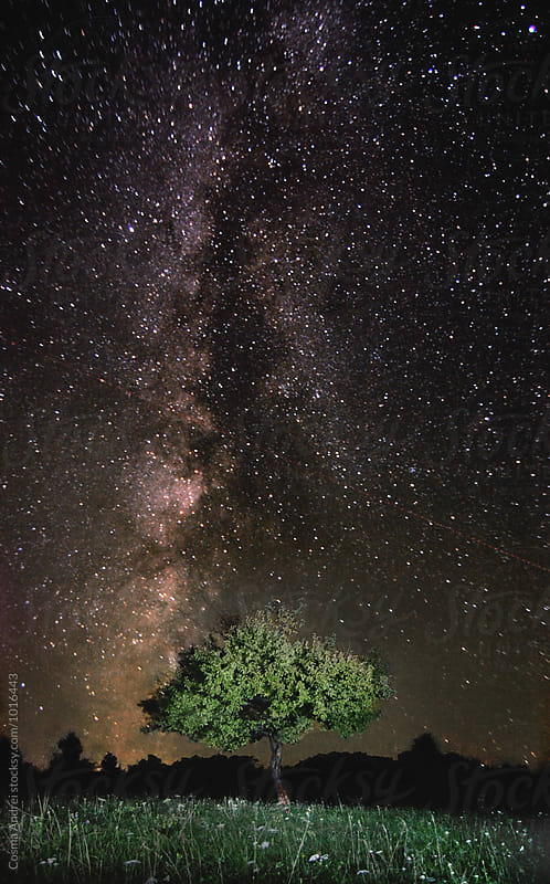 Tree at night with stars by Cosma Andrei for Stocksy United